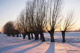 Zimowe popołudnie w okolicy Topolna
