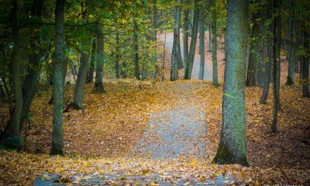 Szlaki na jesienne spacery