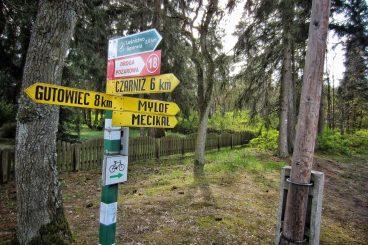 Leśny drogowskaz